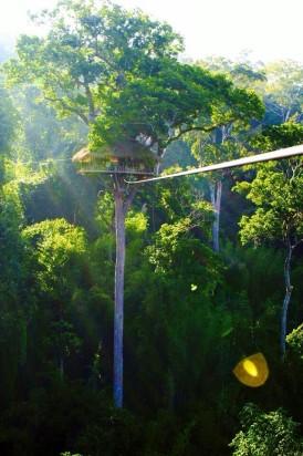 The Gibbon Experience Laos