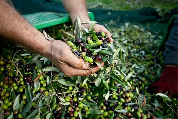Olives tour and safari tour. At the end of the tour you will enjoy a tasting of some local products drinking a good glass of wine in front of a breath-taking view!